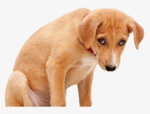 Should you desex your dog